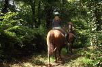 Balade au bois de la Mousse - St Honorine la Guillaume